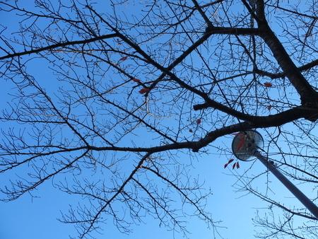 桜 2020年12月8日