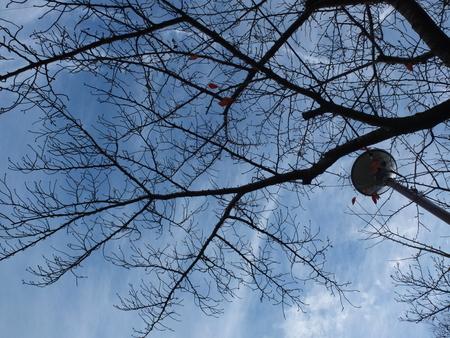 桜 2020年12月9日
