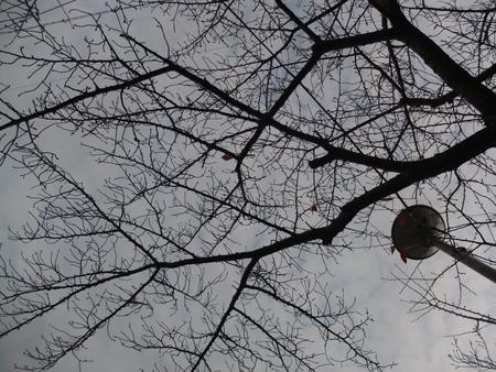 桜 2020年12月10日