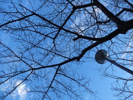 桜 2020年12月14日n