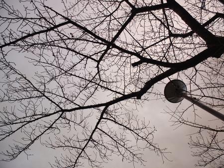 桜 2020年12月16日