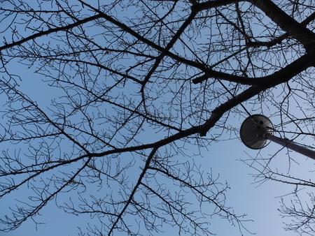 桜 2020年12月18日