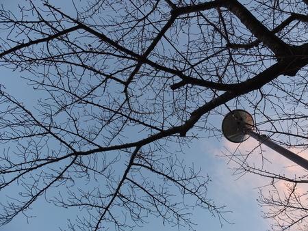 桜 2020年12月19日