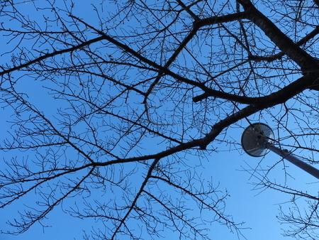 桜 2020年12月21日