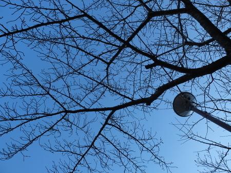 桜 2020年12月22日