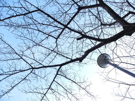 桜 2020年12月23日