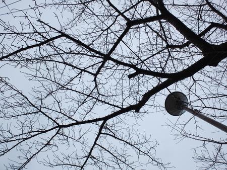 桜 2020年12月24日