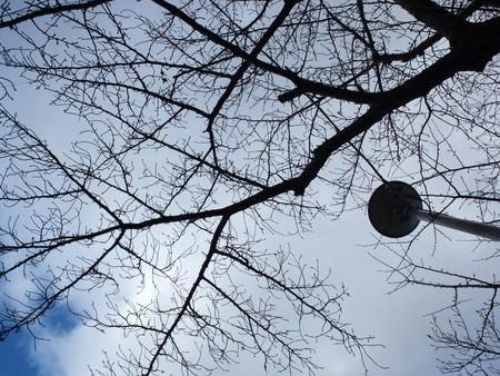 桜 2020年12月25日