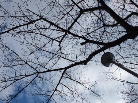 桜 2020年12月26日