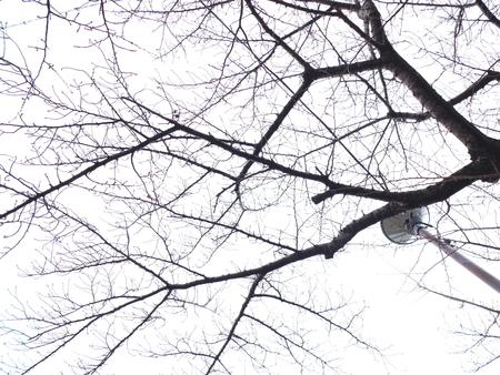 桜 2020年12月29日