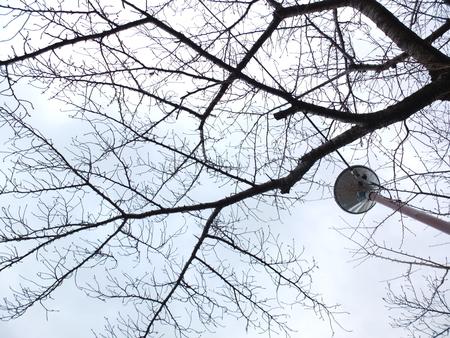 桜 2020年12月30日