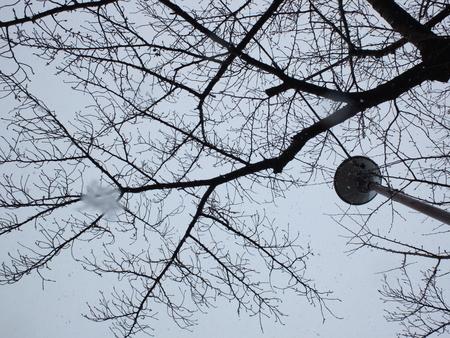 桜 2020年12月31日