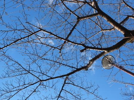 桜 2021年1月1日