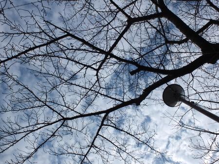 桜 2021年1月5日