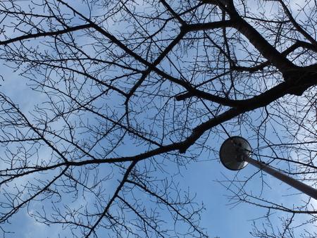 桜 2021年1月7日