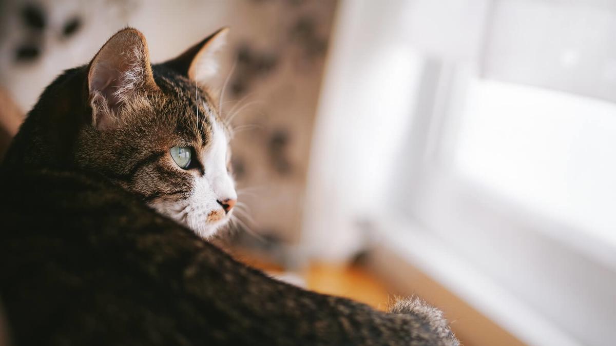 一人暮らしもしないのかとバカにしている猫