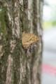 デジイチ初心者がNikon D610で撮影した写真(蝶)