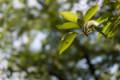 デジイチ初心者がNikon D610で撮影した写真(木)