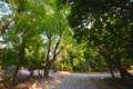 デジイチ初心者がNikon D610で撮影した写真(風景2 木陰)