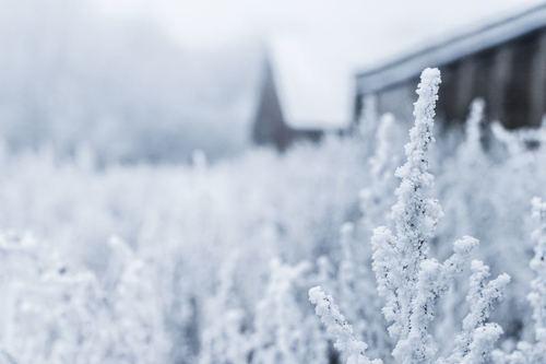 雪国でくっつくハガキはやめていただきたいという思いを込めた雪国pic