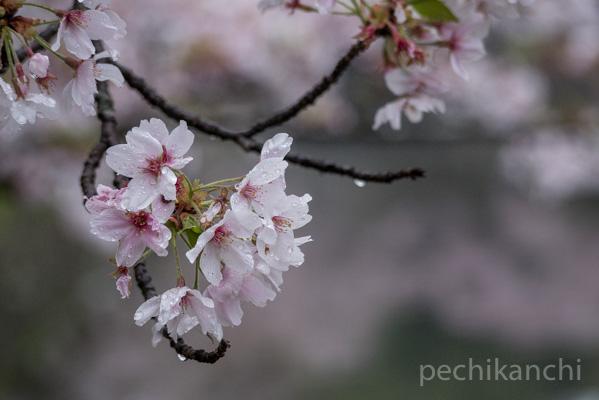 f:id:pechikanchi:20210404143611j:plain