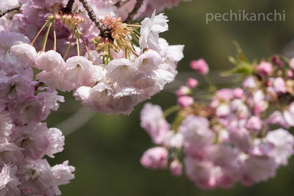 f:id:pechikanchi:20210419150737j:plain