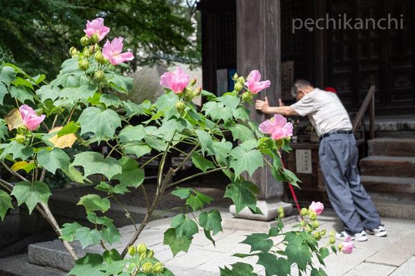 f:id:pechikanchi:20210831132625j:plain