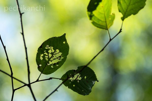 f:id:pechikanchi:20210910151500j:plain