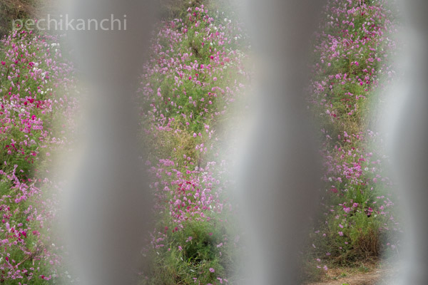 f:id:pechikanchi:20211010144816j:plain