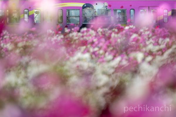 f:id:pechikanchi:20211014182623j:plain