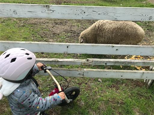 森のまきばオートキャンプ場にいた羊