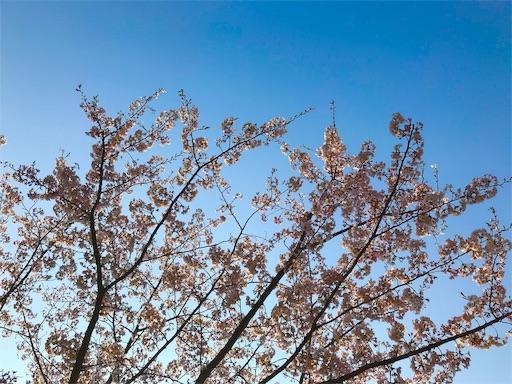 INNTHEPARK(インザパーク)隣接の桜と花見スポット