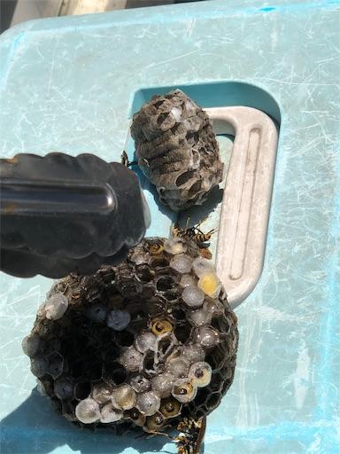 ガス給湯器のパネル内にあった蜂の巣