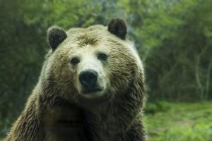 bear-1245807_1280