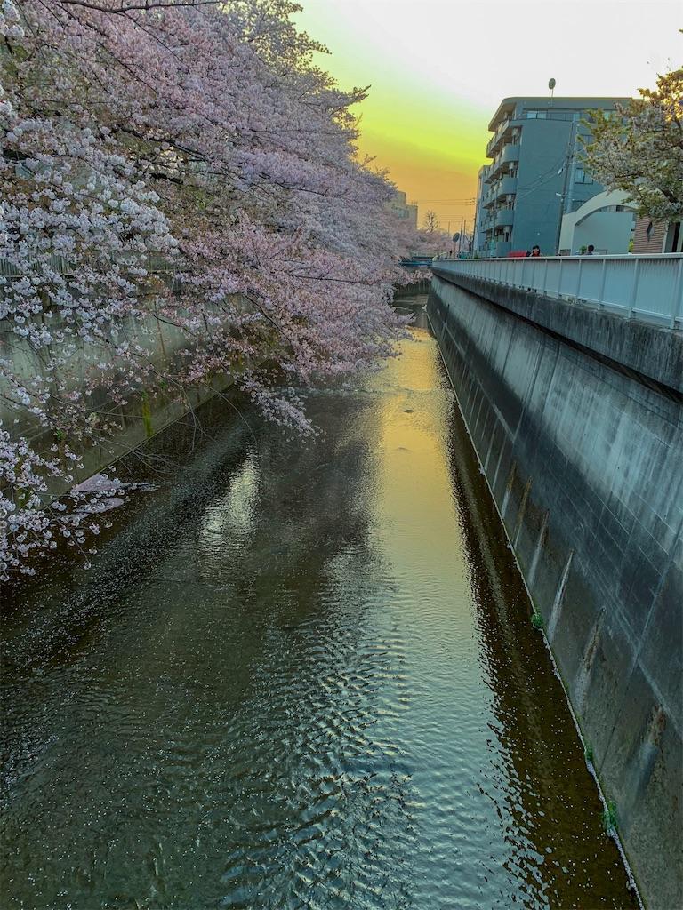 f:id:peggy_tayama:20200605010131j:image