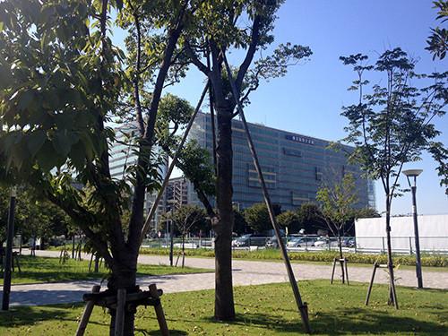 並木道から見える会場 (東京国際交流館)