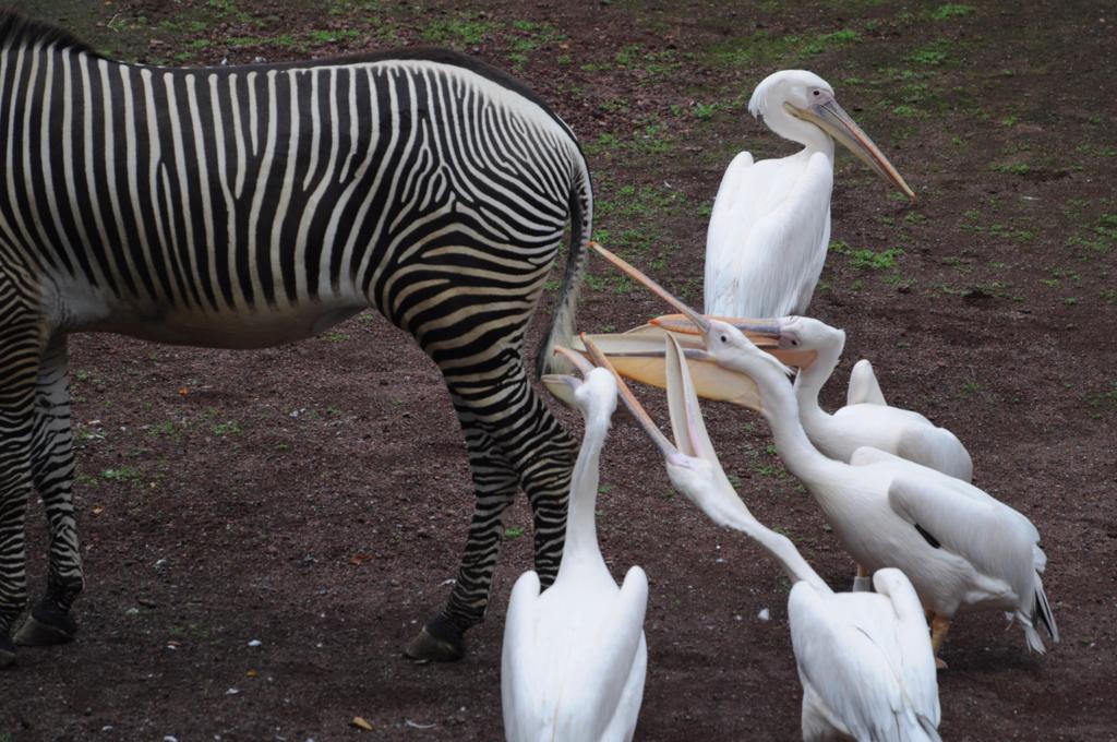 f:id:pelicanchan:20161027175137j:plain