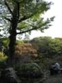 [photo][pema]浜松城