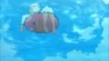 [琴浦さん][琴浦春香][琴浦さん水着][浮き輪]