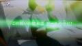 [game][イナズマイレブンGO][菜花黄名子][菜花黄名子(妊娠)]