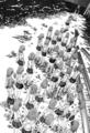 [manga][とある][とある科学の超電磁砲][御坂妹][妹達(シスターズ)][御坂美琴][一方通行]