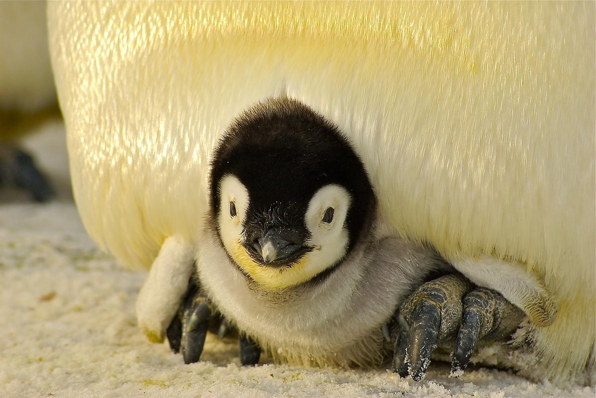 f:id:penguin-kn:20190609100424j:plain