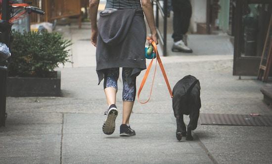 犬と散歩している画像
