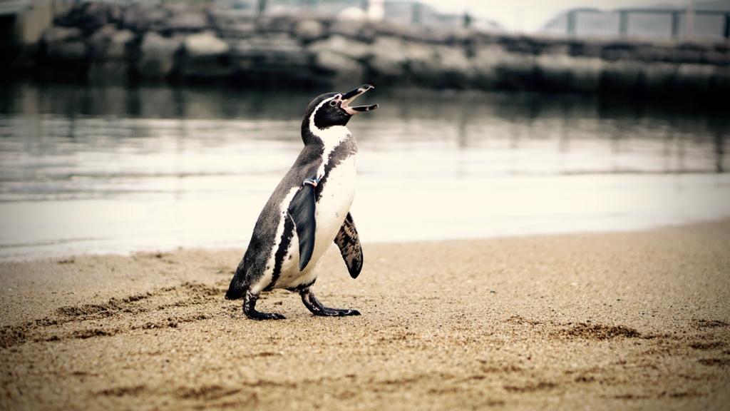 f:id:penguinshobou:20170102020726j:plain