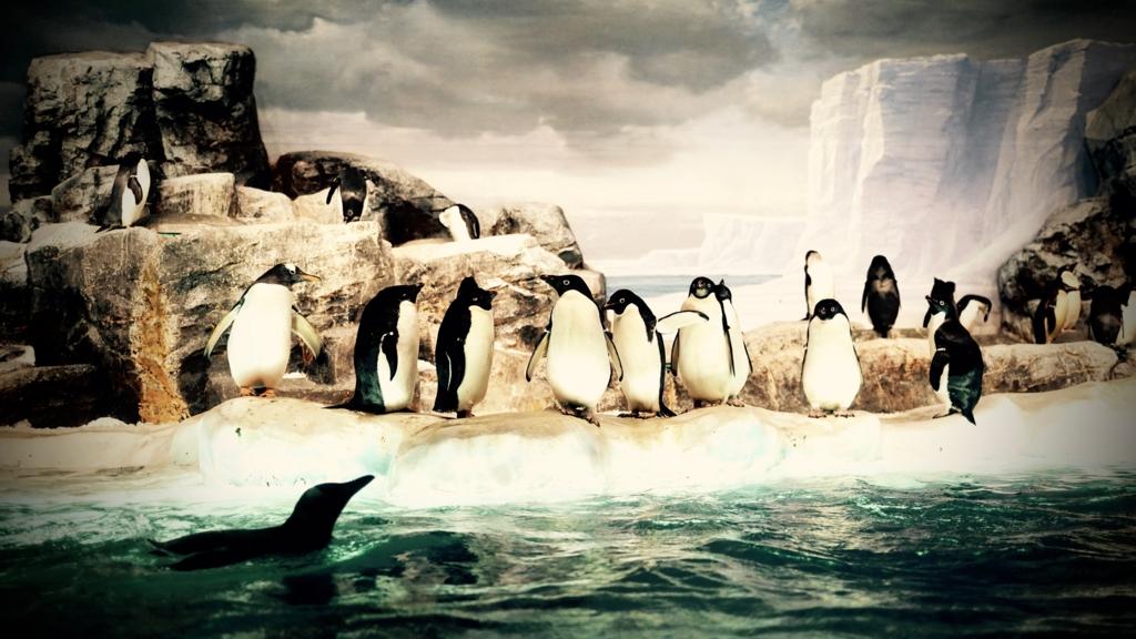 f:id:penguinshobou:20170102133019j:plain