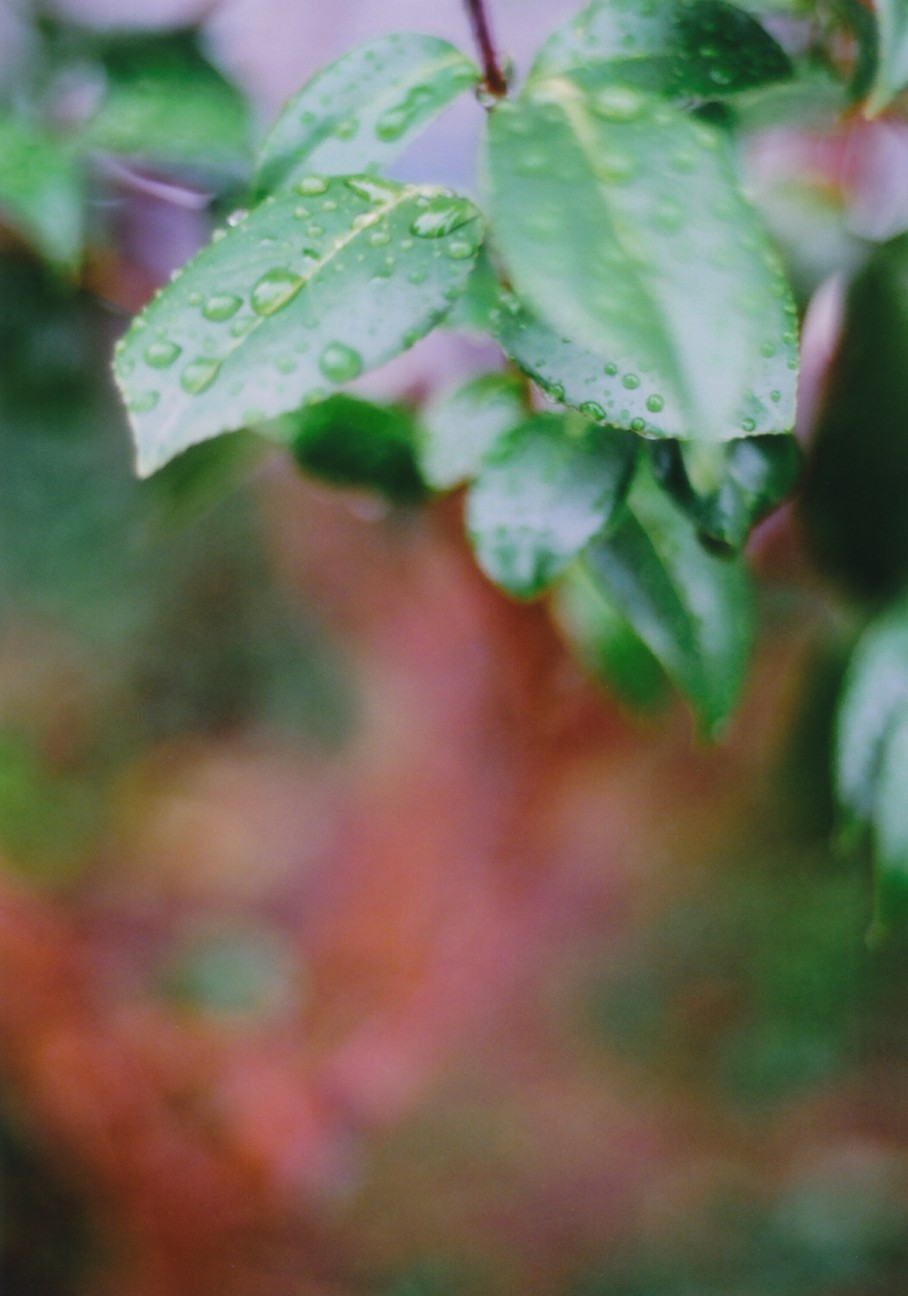 f:id:penpengrass:20180815001922j:image