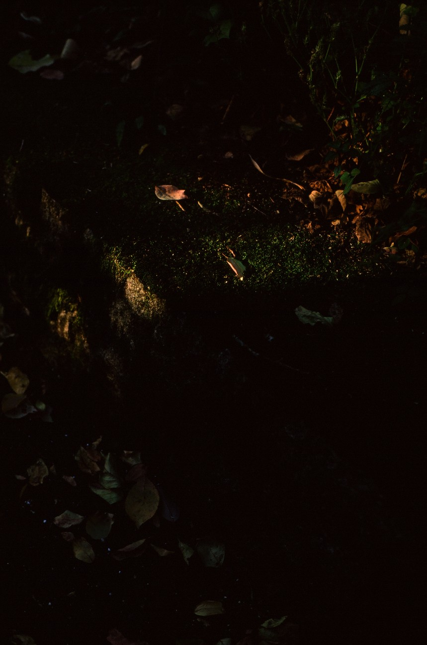 f:id:penpengrass:20181121151840j:image