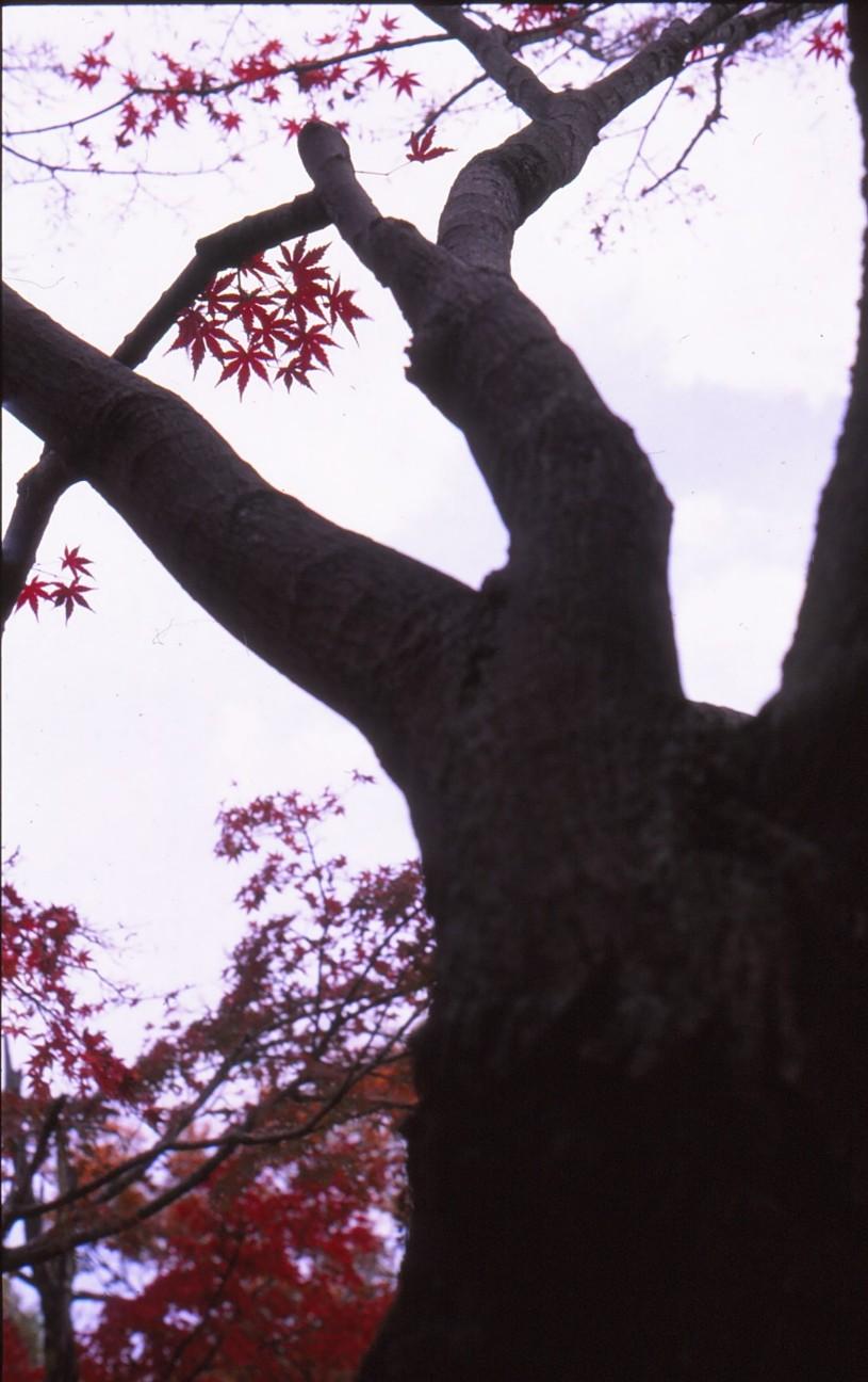 f:id:penpengrass:20181212123021j:image
