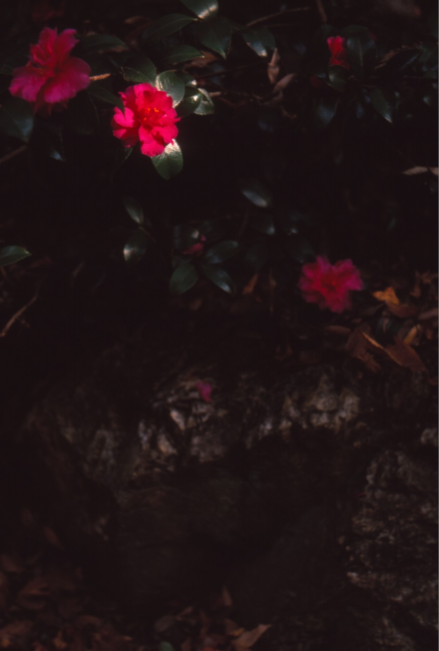 f:id:penpengrass:20181212123401j:image
