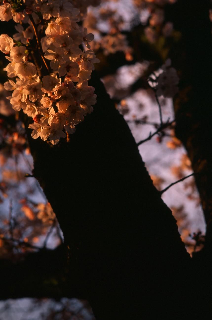 f:id:penpengrass:20190528210050j:image